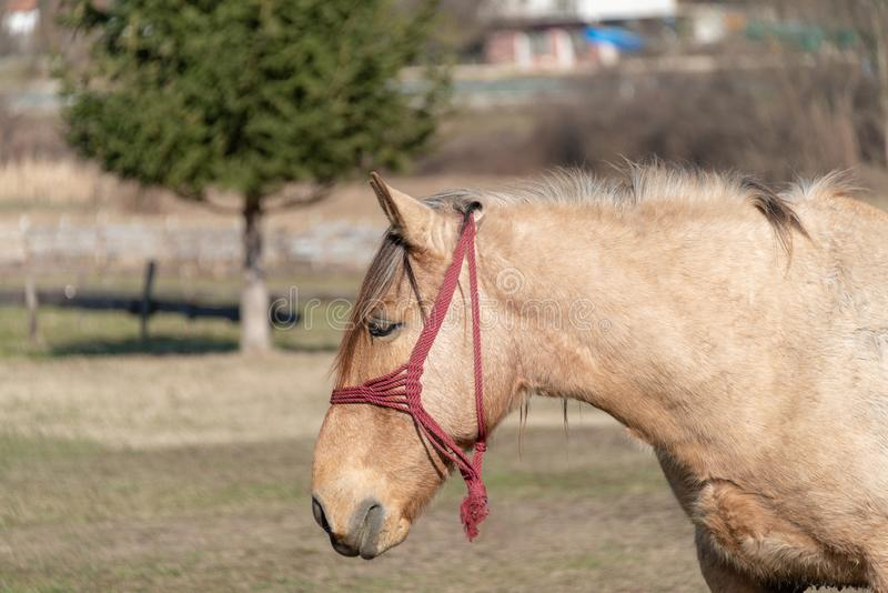 La vida en el campo no se puede imaginar sin un caballo foto de archivo libre de regalías