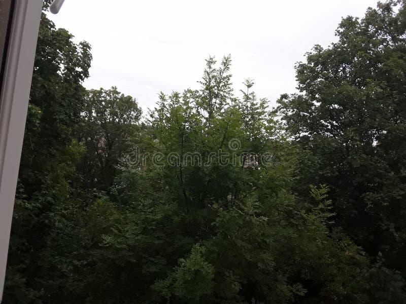 La vida es los árboles que son naturales y verdes como usted ha visto imagenes de archivo