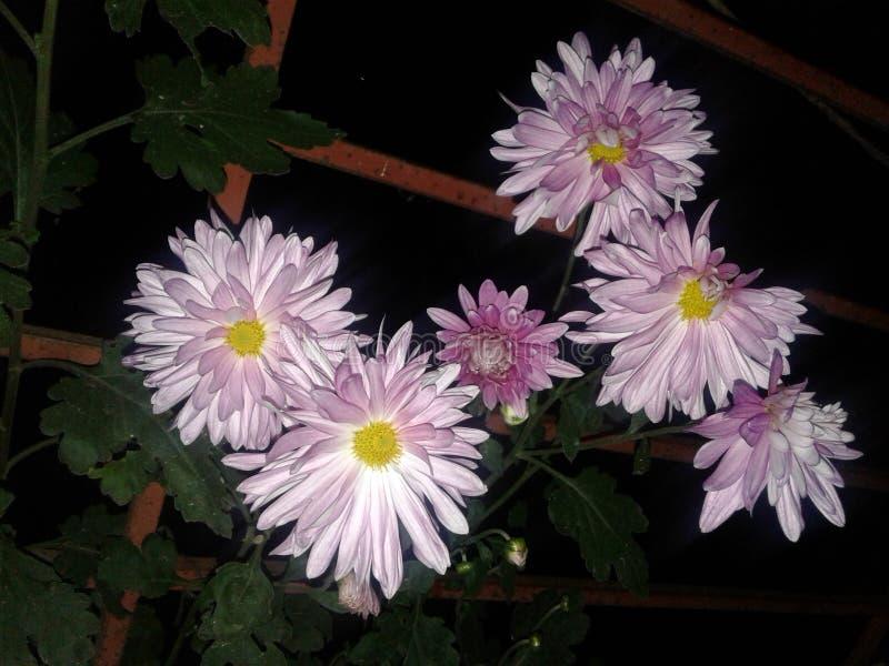La vida humana le gusta hervir las flores fotos de archivo