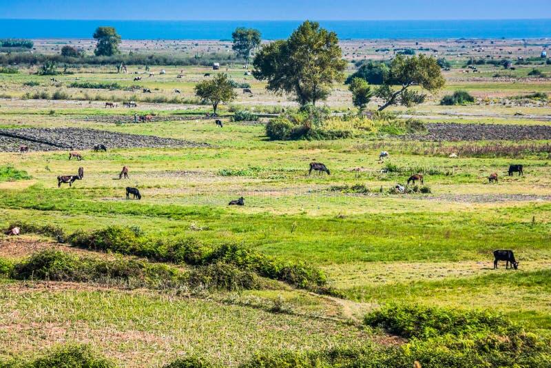La vie d'agriculture près de la mer Méditerranée dans le nord du Maroc photo stock