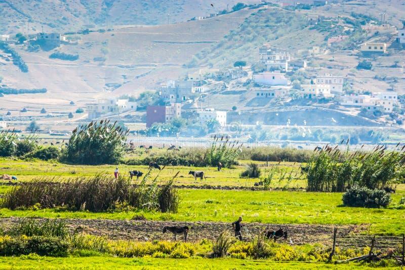 La vie d'agriculture près de la mer Méditerranée dans le nord du Maroc photographie stock libre de droits