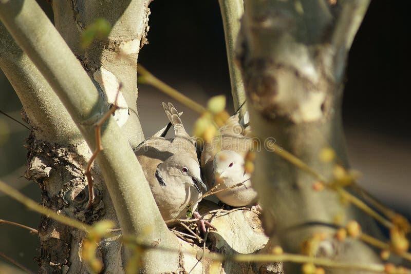 La vie dans le nid photographie stock libre de droits
