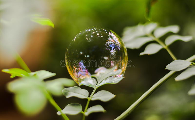 La vie de bulle photos stock
