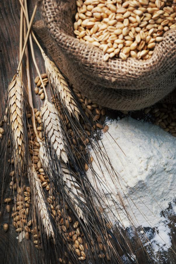 La vie de distillateur de cru avec de la farine organique, grain de blé entier dans le retr image stock