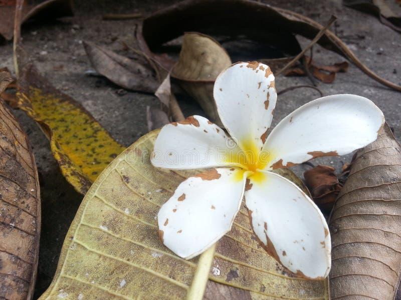 La vie de fleur image stock