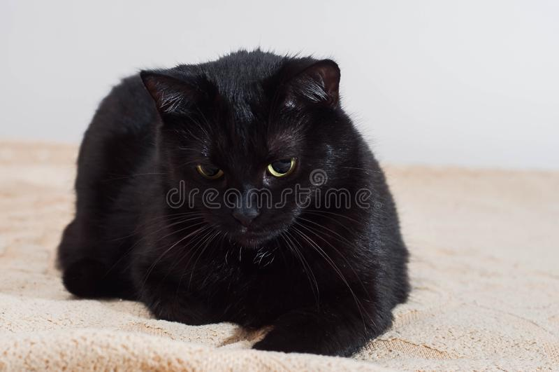 La vie des chats et des personnes dans le monde moderne photos stock
