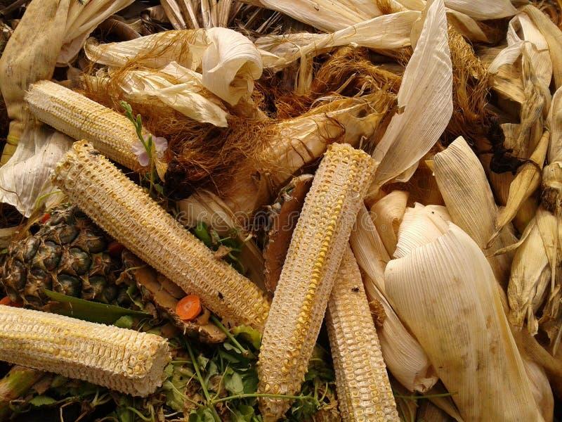 La vie du maïs photo stock