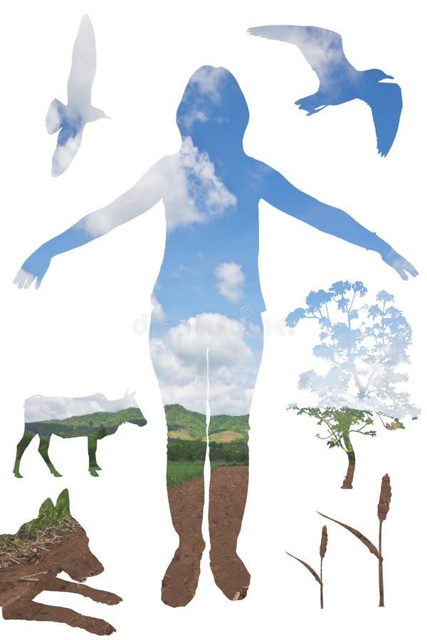 La vie et nature illustration de vecteur