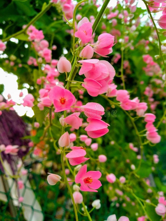 La vie laissée soit belle comme la fleur d'été images stock