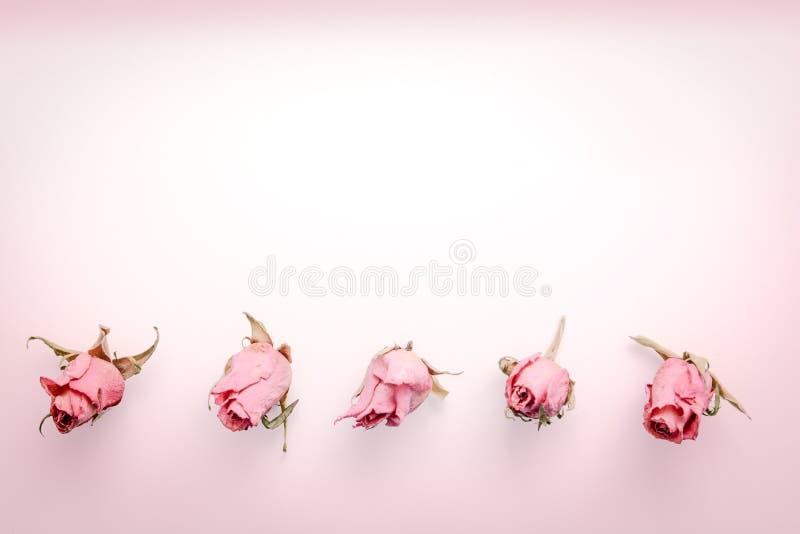 La vie sèche de distillateur de fleur avec les fleurs roses roses image libre de droits