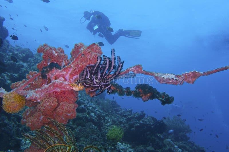 La vie saine de Coral Reef outre de l'île de Balicasan, Philippines photo stock