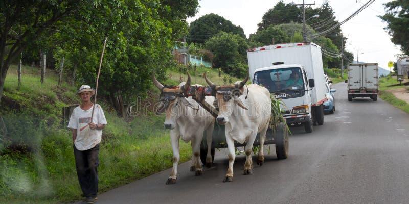 La vie simple en Costa Rica photographie stock libre de droits