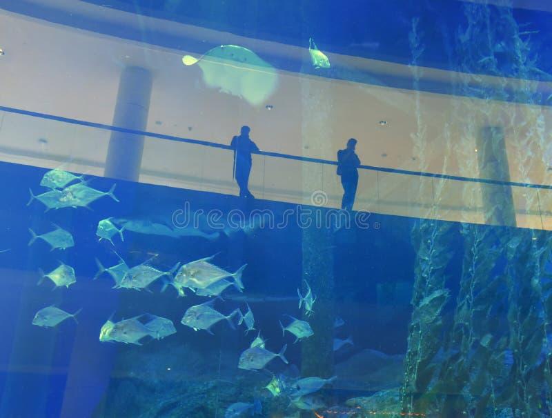 La vie sous-marine dans l'aquarium photos libres de droits