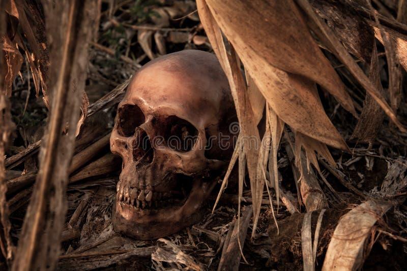 La vie toujours avec un crâne dans le champ de maïs images stock