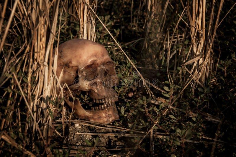 La vie toujours avec un crâne en riz images libres de droits