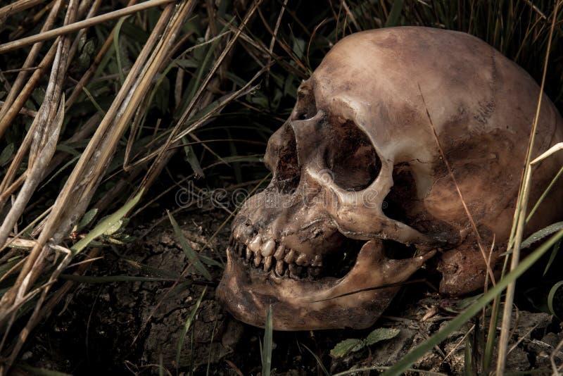 La vie toujours avec un crâne en riz photos libres de droits