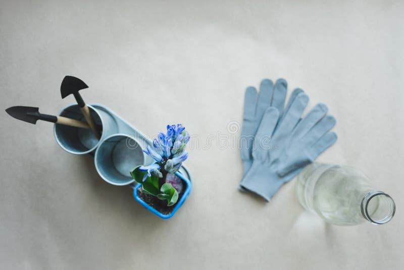 La vie toujours de l'usine de mélange de jacinthe et des outils de jardinage dans le pot en métal, les gants et la bouteille en v photos stock