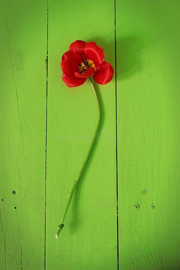 La vie toujours du fruit sur un fond vert images libres de droits