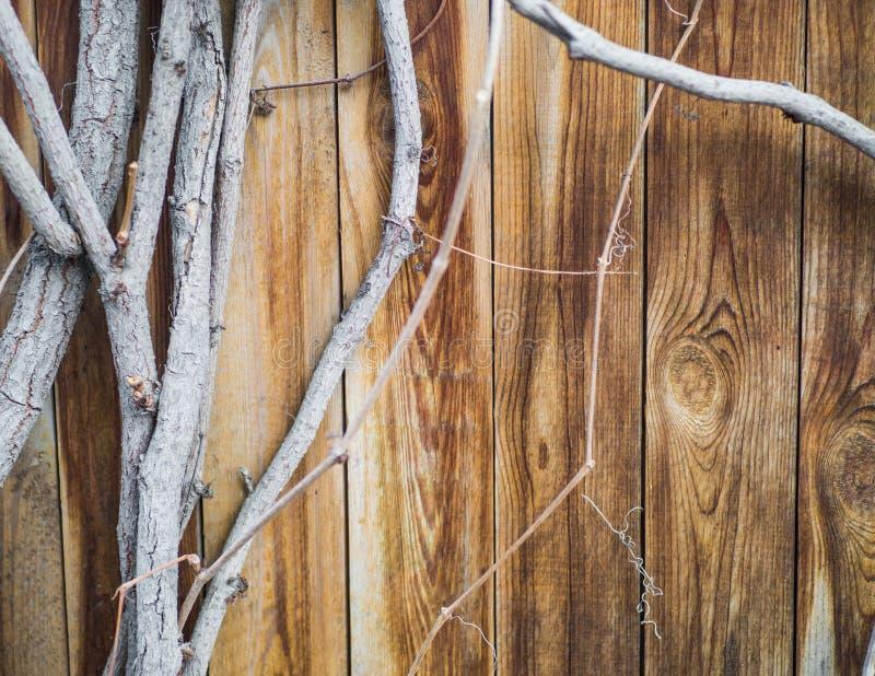 La vieille barrière en bois avec du raisin s'embranche movin sur le vent, cadre pour le texte, l'espace de copie Couleur de vinta image libre de droits