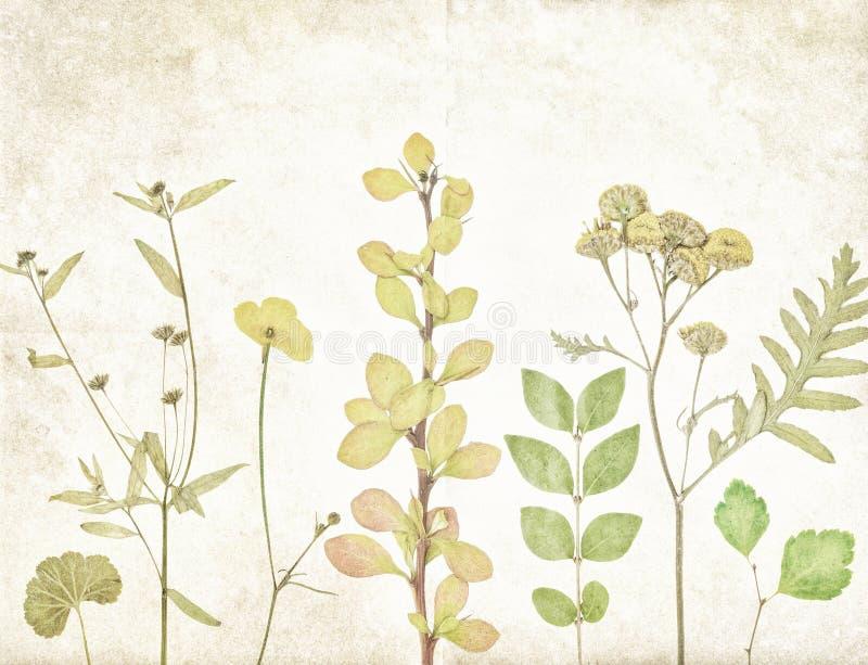La vieille botanique plante le fond de papier illustration de vecteur