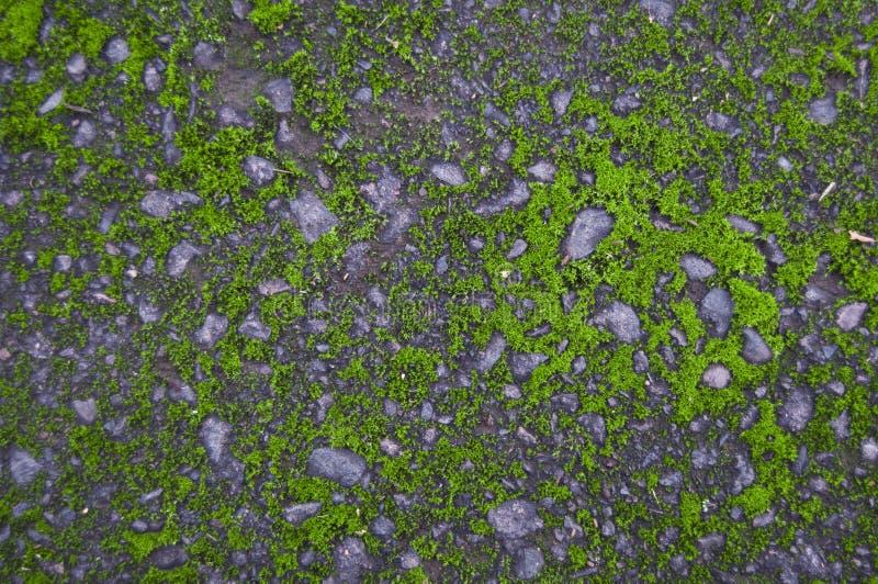 La vieille colle de roche d'asphalte avec de la mousse images libres de droits