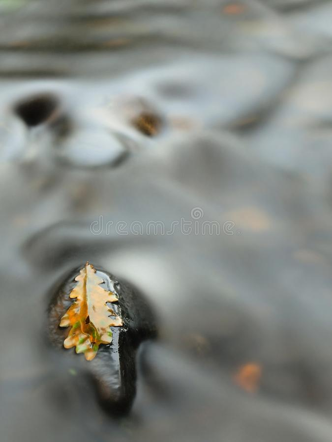 La vieille feuille putréfiée jaune de chêne sur la pierre de basalte dans le froid a brouillé l'eau de la rivière de montagne photo libre de droits