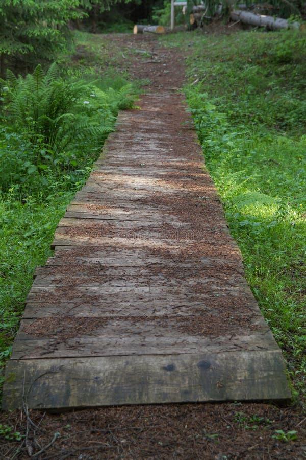 La vieille forêt de rezervation de forêt gren images stock