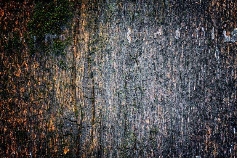 La vieille texture en bois avec les modèles et les fissures naturels sur la surface comme fond Obscurcissez du centre photographie stock libre de droits