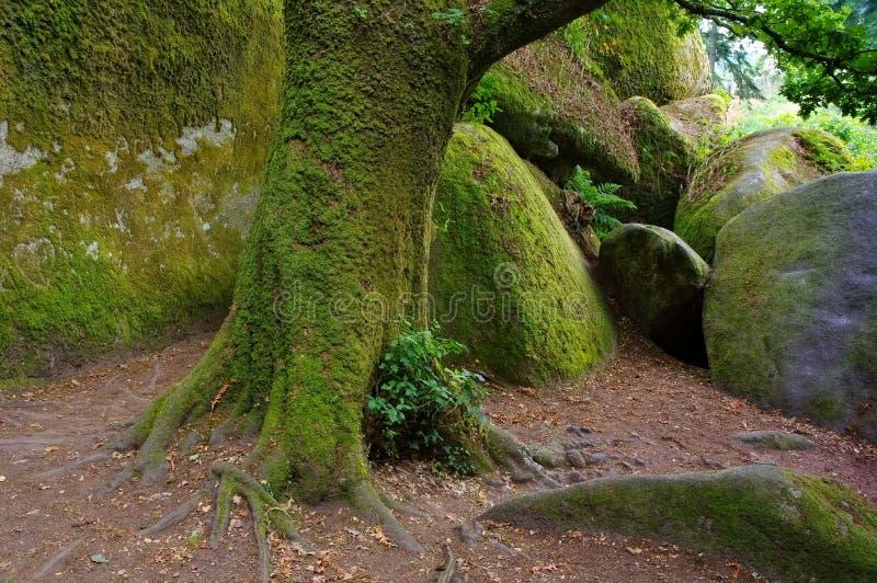 La Vierge de Le Menage de forêt de Huelgoat en Bretagne images stock