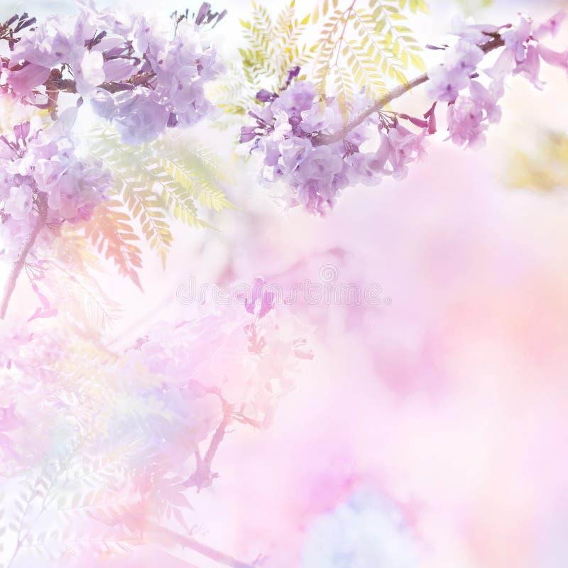 La violeta florece estilo suave con efecto del filtro del vintage foto de archivo