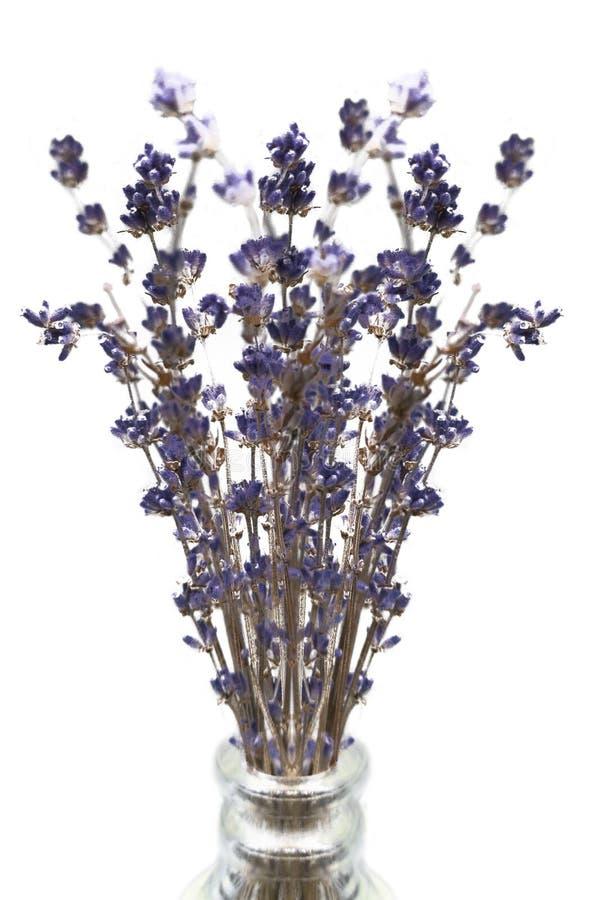 La violette pourpre a séché des fleurs de lavande dans un vase en verre photographie stock libre de droits