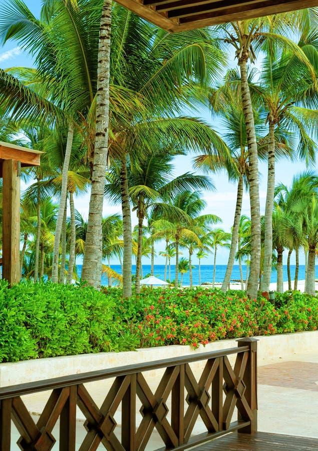La visión desde la terraza del hotel en Paradise tropical Palmeras, flores, playa y océano Viaje del mar foto de archivo libre de regalías