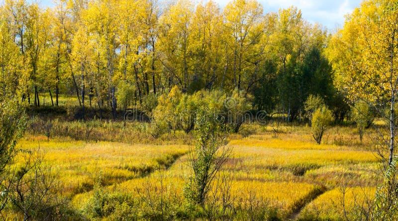La vision de l'automne image libre de droits