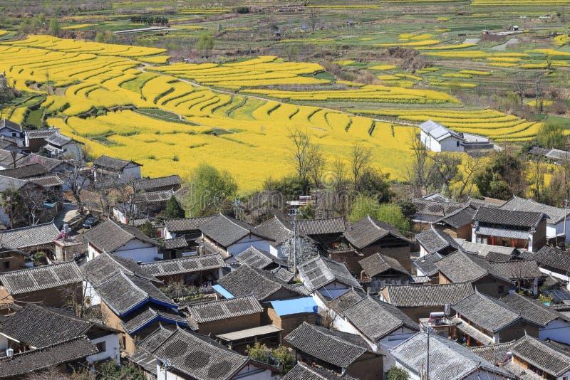 La vista aérea de la rabina florece alrededor del pueblo de ShiGu cerca de Lijiang ShiGu es en Yunnan, China, y era parte del cam imágenes de archivo libres de regalías