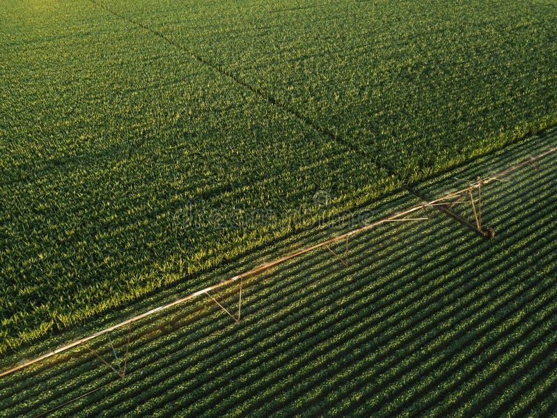 La vista aerea dell'attrezzatura di irrigazione che innaffia la soia verde pota immagine stock
