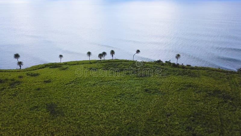 La vista aerea della canna da zucchero sistema sulla costa della st San Cristobal immagine stock