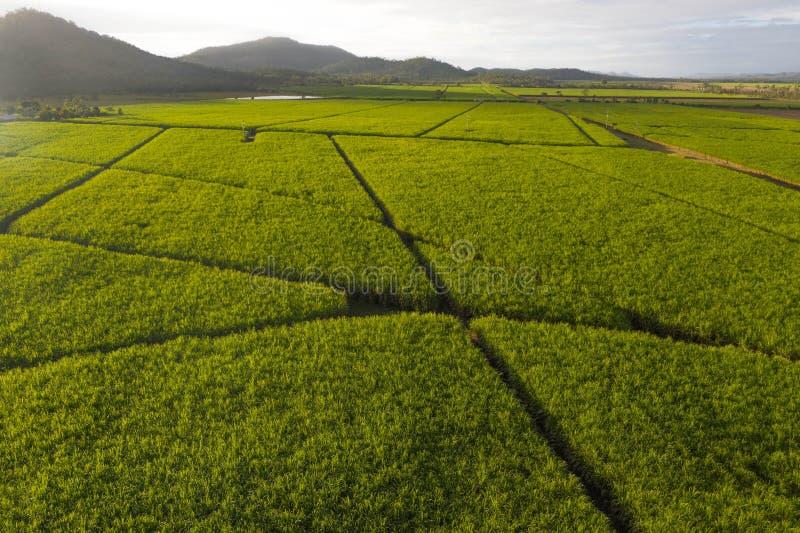 La vista aerea sopra la piantagione di canna da zucchero il paesaggio agriculutural nel paese delle meraviglie tropicale fotografia stock
