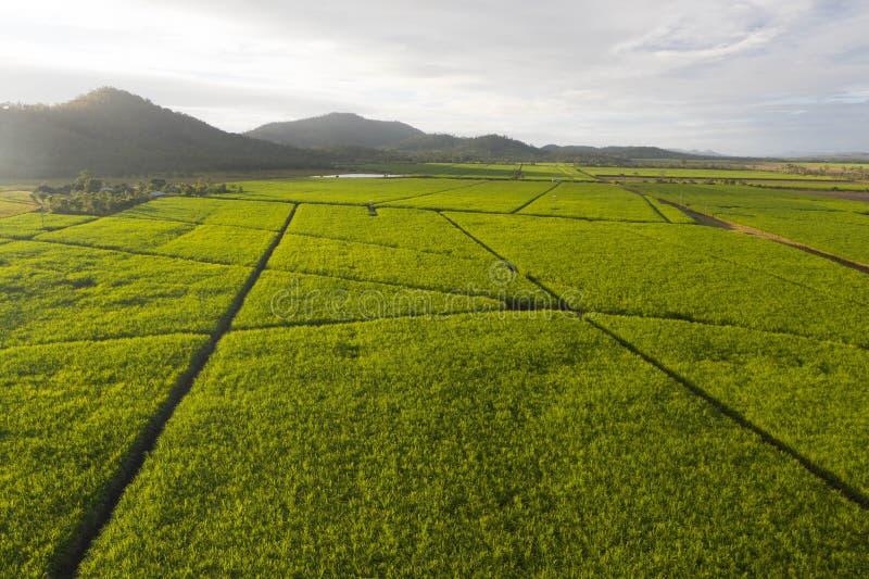 La vista aerea sopra la piantagione di canna da zucchero il paesaggio agriculutural nel paese delle meraviglie tropicale fotografia stock libera da diritti