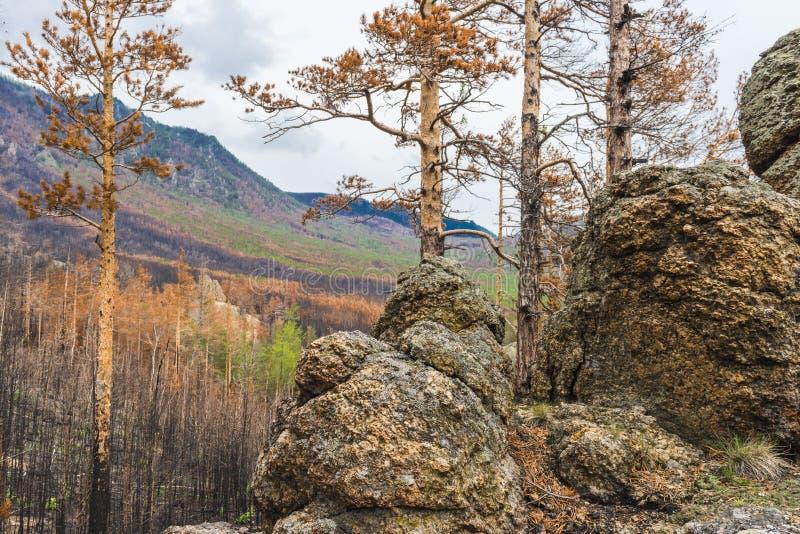 La vista dalla cima della collina sul taiga bruciato fotografie stock libere da diritti