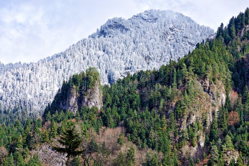La vista de las montañas pieza cuyo se cubre con los árboles de la nieve y de pino, y parte del bosque verde fotografía de archivo libre de regalías