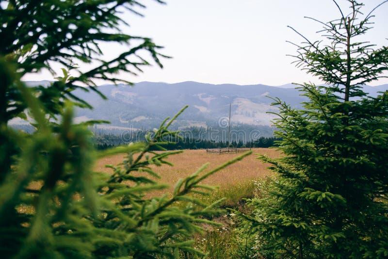 La vista del campo carpatico dalla foresta, fra i rami si attilla fotografia stock
