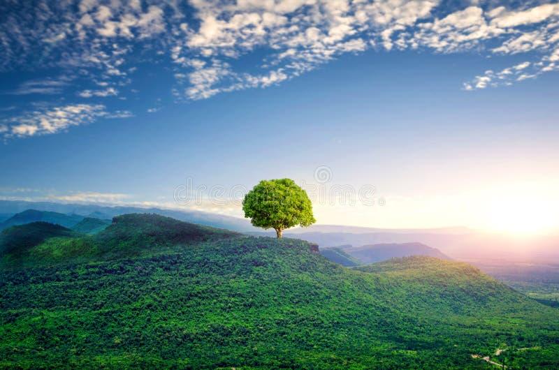 La vista del cielo della montagna, concetto dell'albero di mango immagini stock