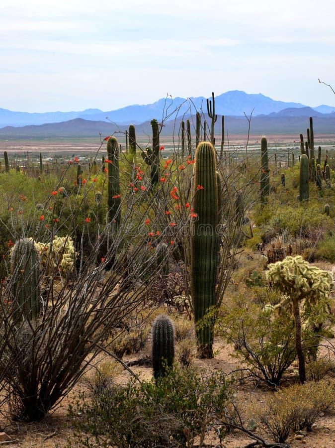 La vista del deserto di Sonoran fotografie stock libere da diritti