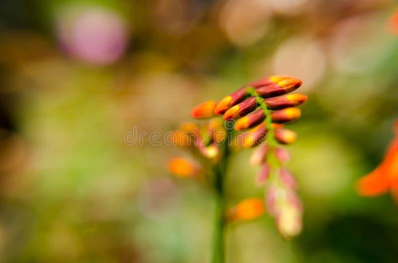 La vista del fiore arancio su si chiude in un giardino variopinto fotografie stock libere da diritti