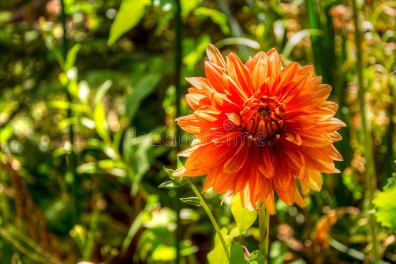 La vista del fiore arancio su si chiude in un giardino variopinto fotografia stock