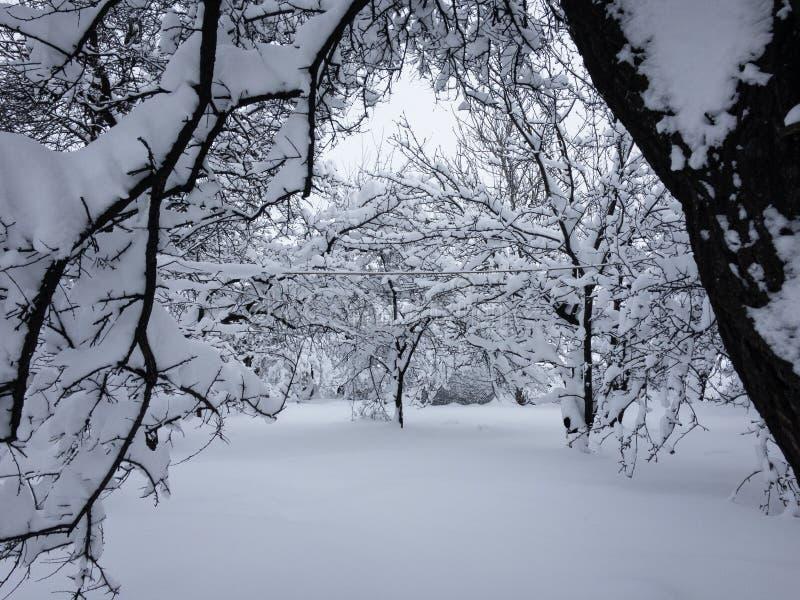 La vista del giardino di inverno immagini stock