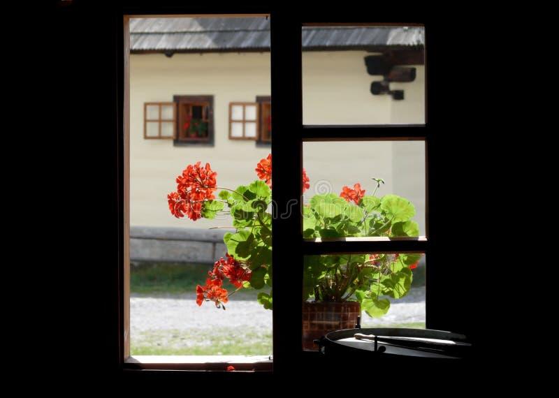 La vista del Idyll con colore rosso fiorisce la finestra fotografie stock libere da diritti