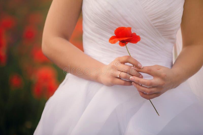 La vista del primo piano delle mani della sposa sta tenendo il fiore del papavero Arco della stella blu con il nastro blu (involu fotografie stock