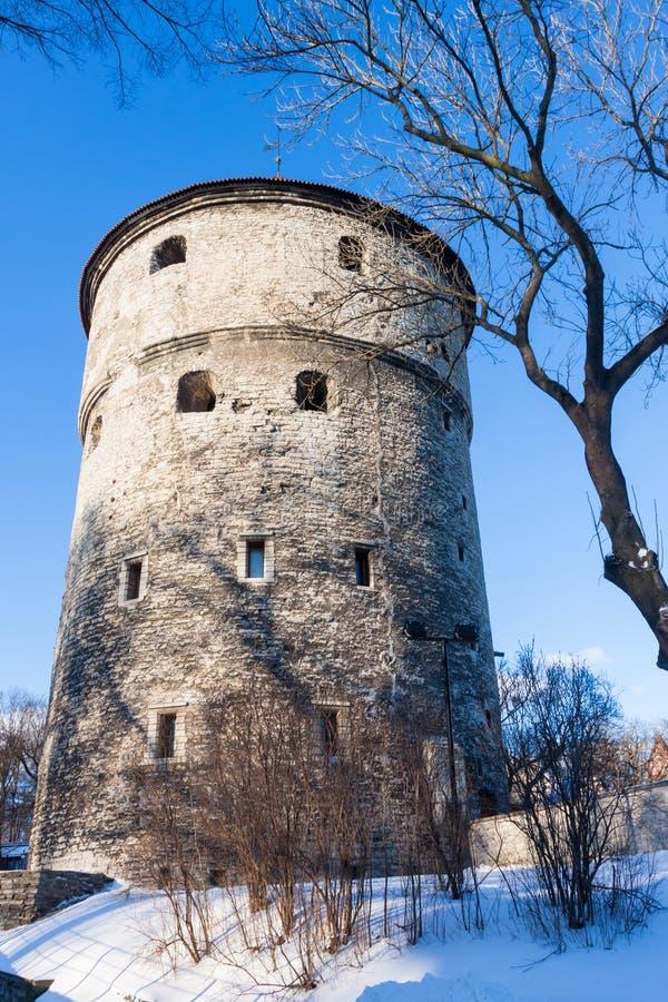 La vista dell'inverno della fortezza si eleva Tallinn. L'Estonia fotografia stock