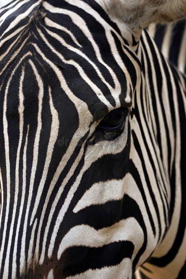 Download La vista dell'occhio immagine stock. Immagine di africa - 204755
